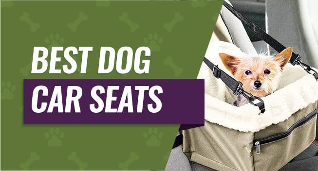 Best Picks For Pet Travel Supplies